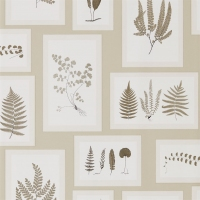 Обои Sanderson Woodland Walk Wallpapers Fern Gallery 215714