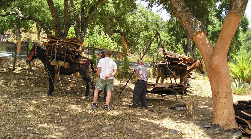 Для снятие коры пробкового дуба используется только ручной труд