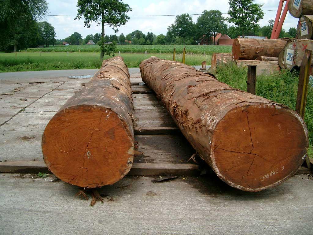 Древесина из которой делают паркетную доску мербау
