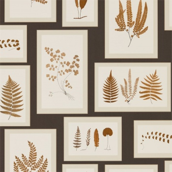 Обои Sanderson Woodland Walk Wallpapers Fern Gallery 215713
